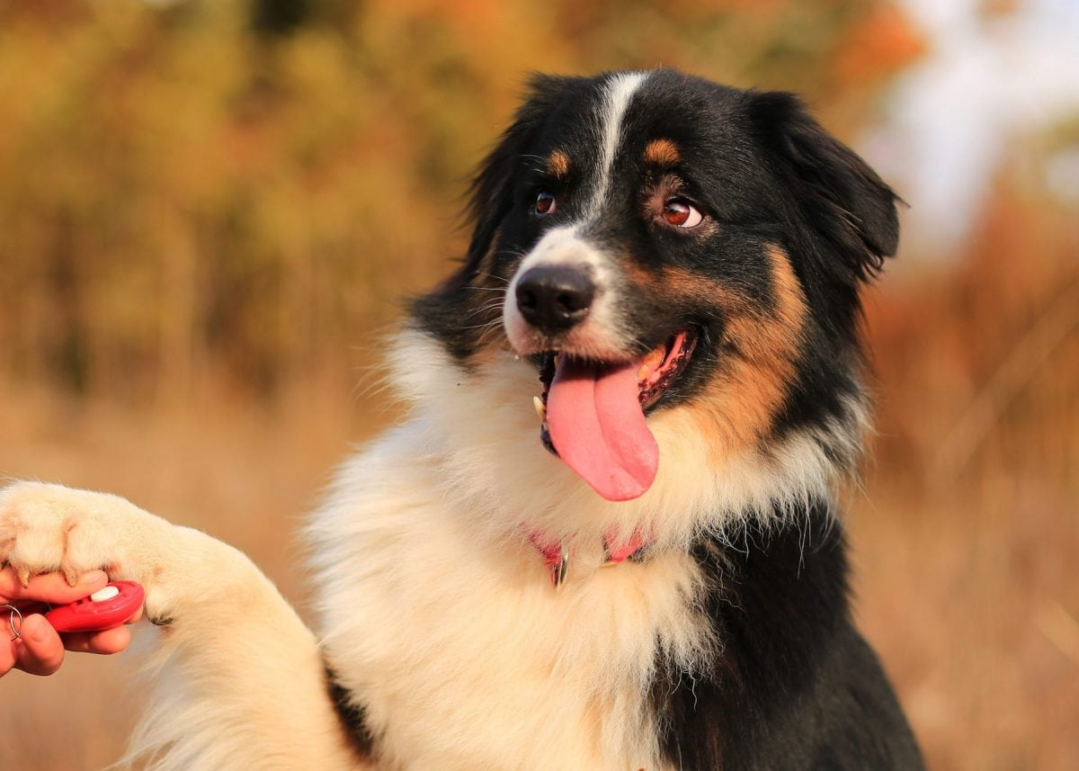 5 Simple Tips for Training Your Dog