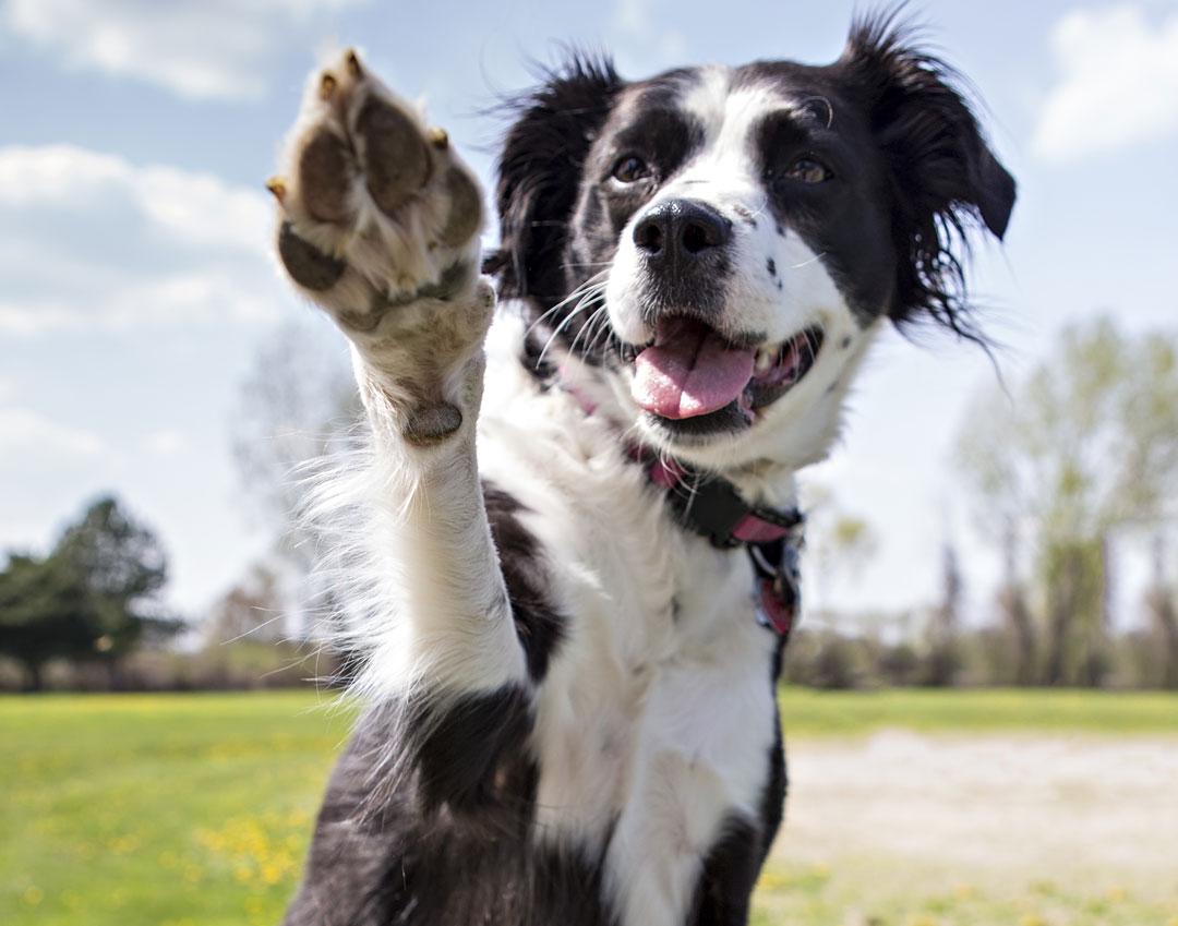 5 Super Easy Tricks to Teach Your Dog